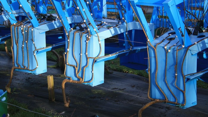 A Furniture Farm Is Growing Whole Chairs