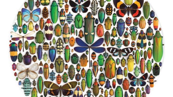 'Biophilia' Book Preserves Nature's Beauty in Mosaics and Mandalas