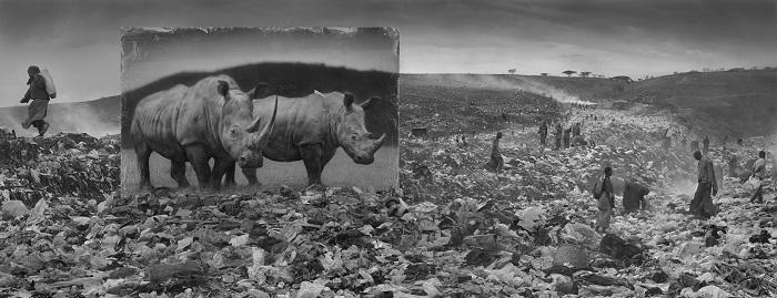 Wasteland with Rhinos & Residents 2015.jpg