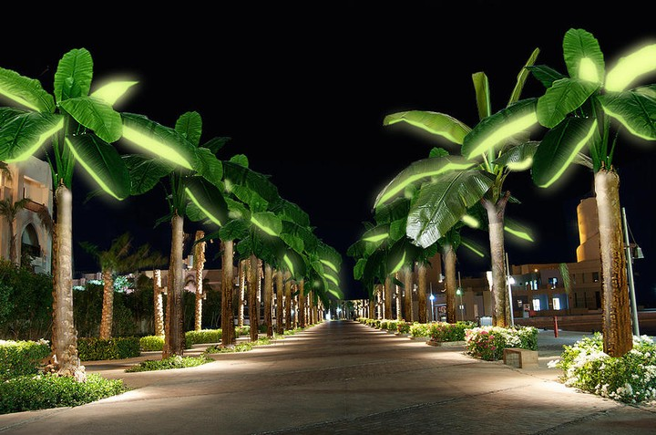 Eternal Sunshine Could Come from Solar-Powered Palm Trees