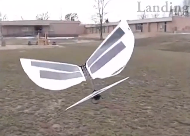 Watch a Robot Fly Like a Real Bird - VICE
