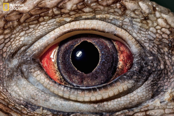 These Exotic Animal Photos Are Literal Eye Candy